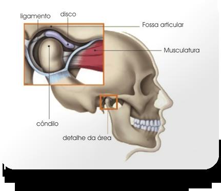 articulação temporomandibular